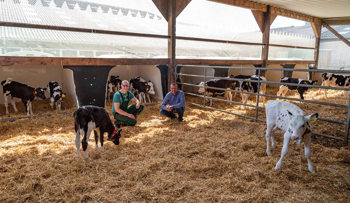 Kälber im Stroh, Gruppenhaltung, Berater und Landwirt im Stall, Rinderfütterung, Kälberiglu